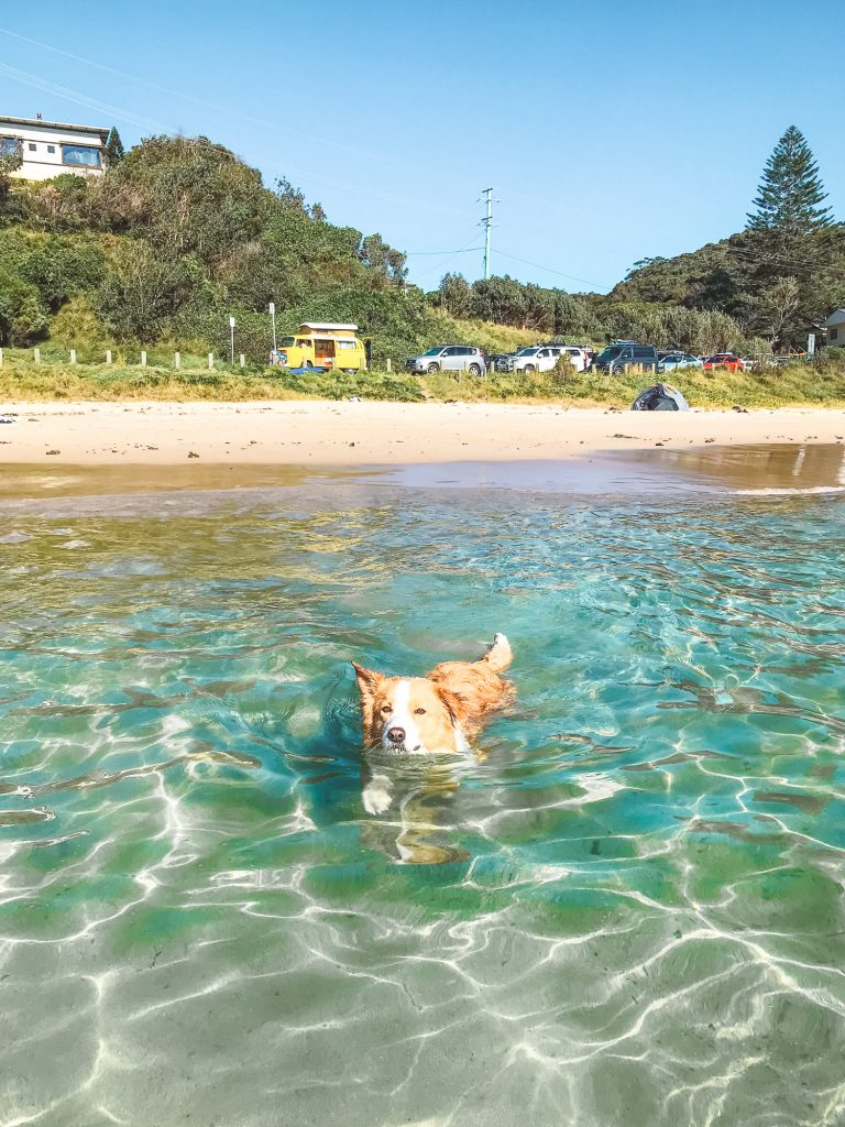 dog-friendly road trip beach swimming