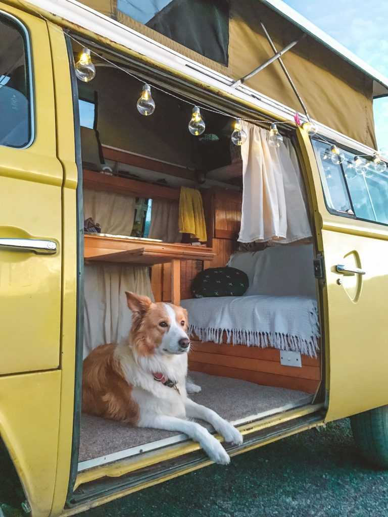 dog-friendly road trip kombi