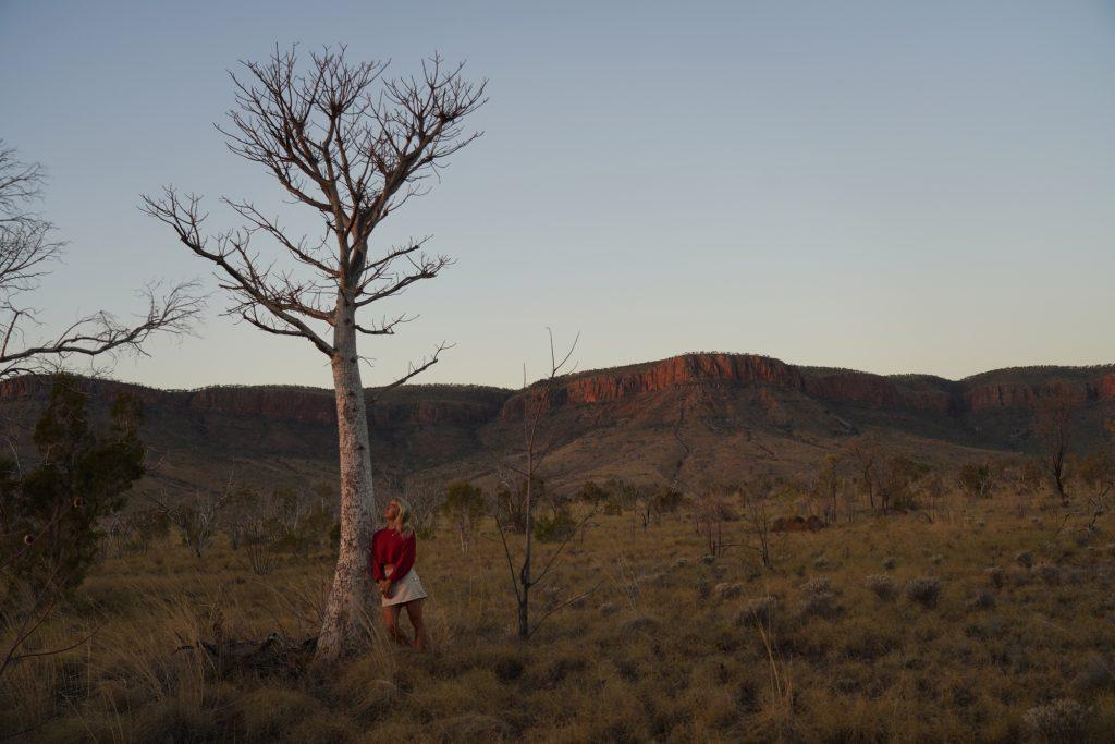 East Kimberley young boab