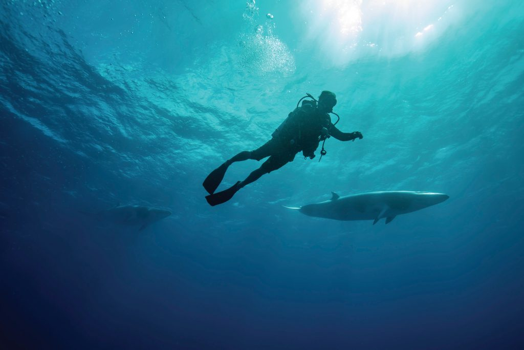 Swim with whales Great Barrier Reed